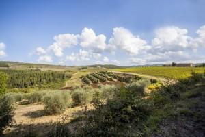 _MG_5466_la_paneretta_tuscany_wine