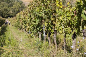_MG_5474_la_paneretta_tuscany_wine