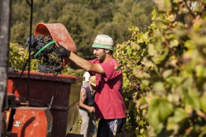 _MG_5488_la_paneretta_tuscany_wine