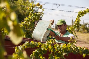 _MG_5499_la_paneretta_tuscany_wine